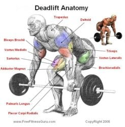 Trap Bar Deadlift vs Squat