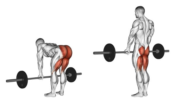 What Muscle Groups Do Deadlifts Work? - Romanian deadlift muscle groups