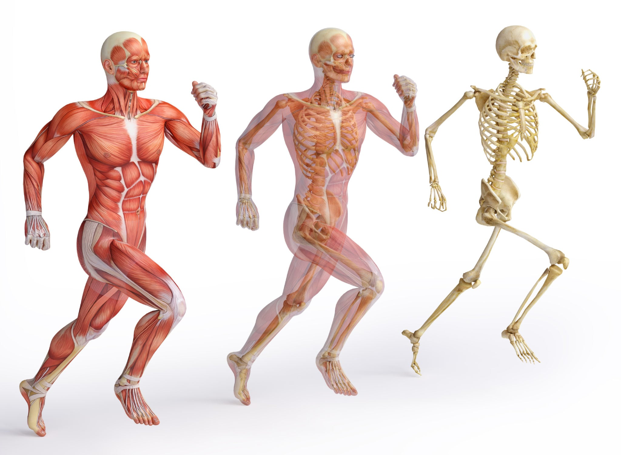 musculoskeletal system dark iron fitness